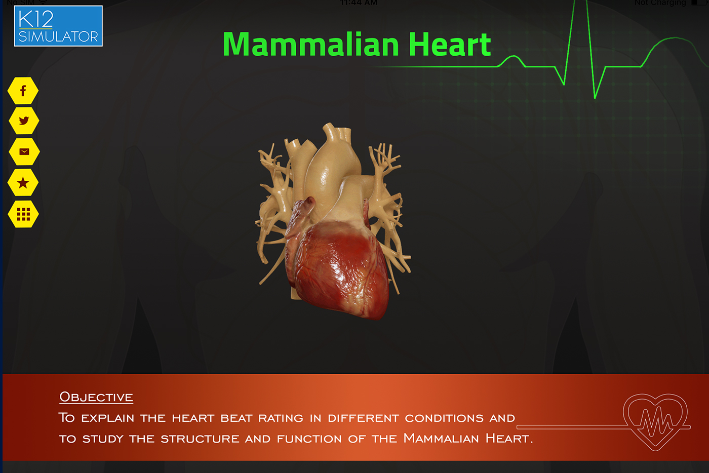 mammalian heart 1 the human heart, like that of all mammals, has two atria and two ventricles blood enters the heart by the atria and leaves from the ventricles.